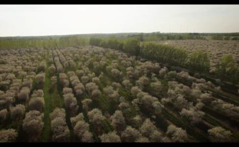 A Look at Seaquist Orchards Cherry Blossoms from Above